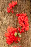 Czerwoni kwiaty p?omienie zdjęcia royalty free