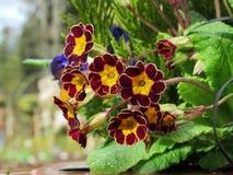 Czerwoni kwiaty Po deszczu up zakończenia Obrazy Royalty Free