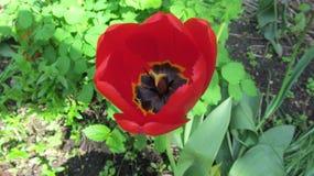 Czerwoni kwiaty w miasto ogr?dzie zdjęcia stock
