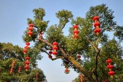 Czerwoni lampiony w parku Zdjęcie Royalty Free