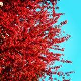 Czerwoni liście i gałąź skład Fotografia Stock