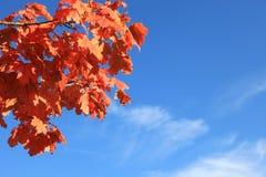 Czerwoni liście klonowi przed niebieskim niebem z kopii przestrzenią zdjęcie royalty free