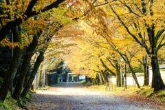 Czerwoni liście klon w jesieni Japonia Obraz Stock