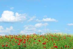 Czerwoni maczków kwiaty, niebieskie niebo z chmurami i Obrazy Royalty Free