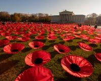 Czerwoni maczki jako pomnik 100 rok rocznicy en obrazy stock