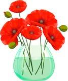 Czerwoni maczki kwitną w szklanej wazie Fotografia Royalty Free