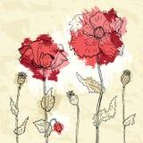 Czerwoni maczki na zmiętym papierowym tle Obrazy Royalty Free