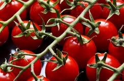 czerwoni mali pomidory obrazy stock