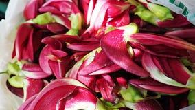 Czerwoni Nucić Sesban Agasta lub ptaka kwiaty Te kwiaty są jadalni Fotografia Stock