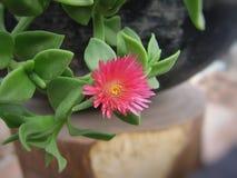 czerwoni piękni kwiaty Zdjęcia Royalty Free