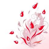 czerwoni piękni kwiaty Fotografia Royalty Free