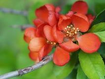 czerwoni piękni kwiaty Obrazy Stock