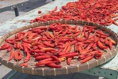 Czerwoni pieprze suszy w słońcu na koszu fotografia royalty free
