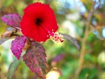 Czerwoni poślubników kwiaty 02 Zdjęcie Stock