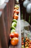 Czerwoni pomarańczowi i zieleni pomidory zdjęcia stock
