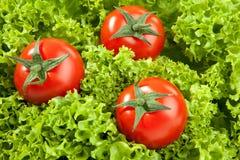czerwoni pomidory Fotografia Stock
