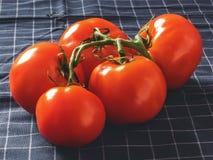 Czerwoni pomidory na gałąź na czarnej tkaninie Zdjęcie Royalty Free
