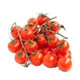 Czerwoni pomidory na gałąź odizolowywającej na bielu Fotografia Royalty Free