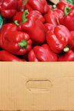 czerwoni pudełkowaci dzwonów pieprze Obraz Stock