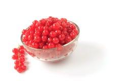 Czerwoni rodzynki (Ribes rubrum) Fotografia Royalty Free