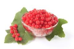 Czerwoni rodzynki (Ribes rubrum) Obrazy Stock