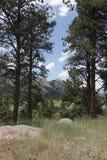 Czerwoni skaliści pasma górskie za drewnami Obraz Stock