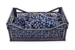 Czerwoni stołowi winogrona w plastikowej skrzynce (Vitis) Zdjęcia Royalty Free