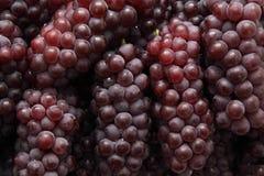czerwoni tło winogrona Zdjęcie Royalty Free