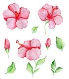 Czerwoni tropikalni kwiaty i liście Zdjęcie Royalty Free