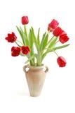 CZERWONI tulipanów kwiaty Obraz Stock