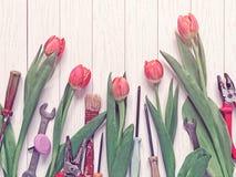 Czerwoni tulipany i różnorodni instrumenty są na lekkim drewnianym tle Zdjęcia Royalty Free