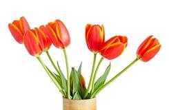 Czerwoni tulipany kwitną z żółtymi lampasami, barwiony flowerpot, waza, zdjęcie stock