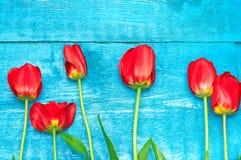 Czerwoni tulipany na błękitne deski Obrazy Stock