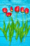 Czerwoni tulipany na błękitne deski Obraz Royalty Free