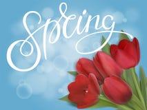 Czerwoni tulipany na błękitnym tle Zdjęcie Stock