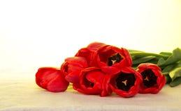 Czerwoni tulipany na parciaku zdjęcie royalty free