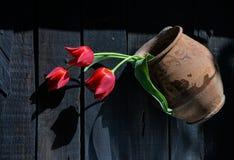 Czerwoni tulipany w antycznym glinianym garnku Fotografia Royalty Free