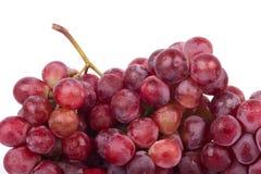 Czerwoni winogrona Obrazy Stock