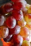 Czerwoni winogrona fotografia stock