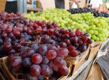 Czerwoni winogrona i Zieleni winogrona Zdjęcia Royalty Free