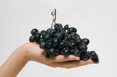 Czerwoni winogrona w ręce Obraz Royalty Free