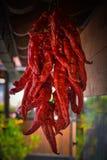 czerwoni wiszący chili pieprze Fotografia Stock