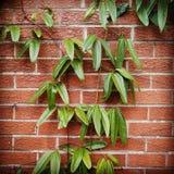 Czerwony ściana z cegieł i roślina fotografia royalty free