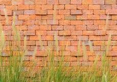 Czerwony ściana z cegieł z frontową zieloną trawą obraz stock