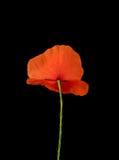 czerwony życie wciąż zielska Zdjęcie Royalty Free