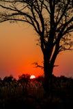 Czerwony Afryka zmierzch Zdjęcia Stock