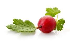 Czerwony agrest odizolowywający na bielu Obraz Stock
