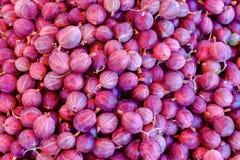 Czerwony agrestowy tło Odgórny widok czerwona agrestowa owoc Zdjęcie Stock
