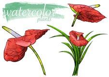 Czerwony akwarela kwiatu set ilustracja wektor