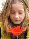 czerwony anemonowa Fotografia Royalty Free
